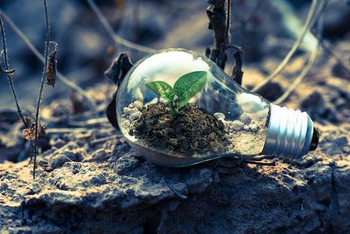 light bulb plant eco-friendly