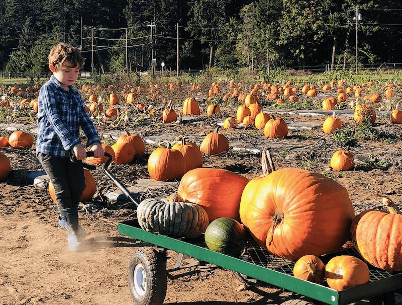 fat-turnip-farms-fall