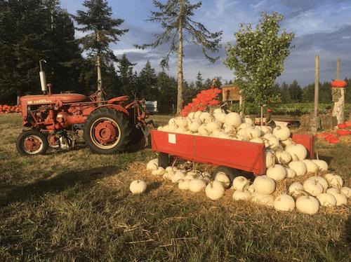 fall-activities-suyematsu-farms
